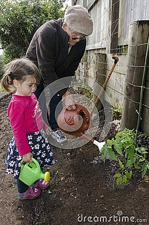 Grandpa and grandchild planting tomato plant
