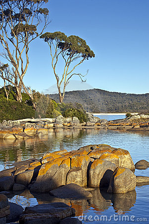 Granite and eucalyptus trees, Bay of Fires