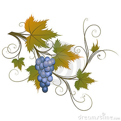 Free Grape Stock Photo - 3241870