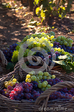 Grape baskets