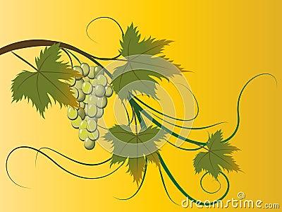 Grape brunch