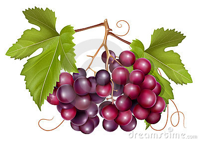 Grape cluster with green leaves