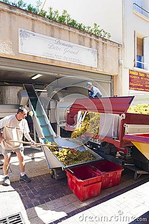 Free Grape Coop Collioure Stock Photo - 54074930