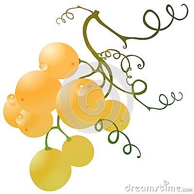 Grape gold