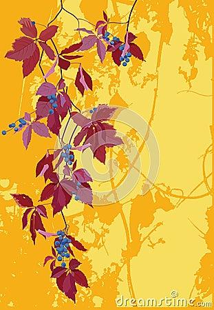 Grape on grunge background