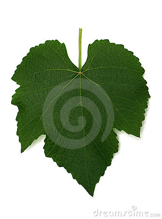 Free Grape Leaf Royalty Free Stock Image - 1036786