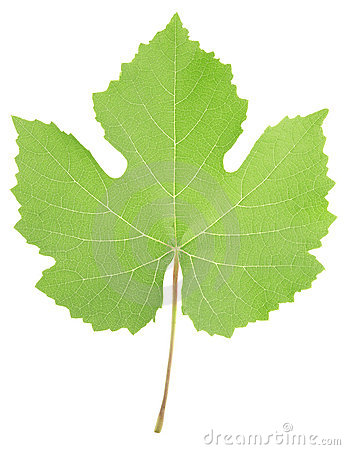 Free Grape Leaf Stock Photography - 18752742