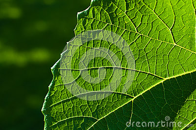 Grape leaf textured part front
