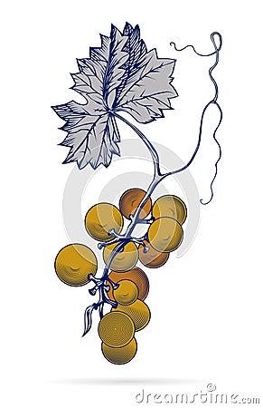 Grape leave