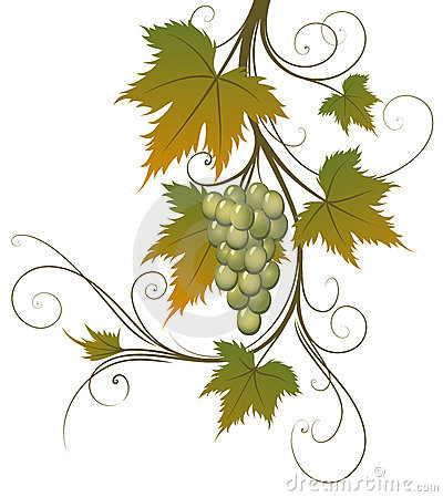 Grape and leaves