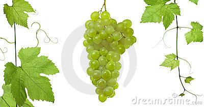 Grape-leaves ansd grapes