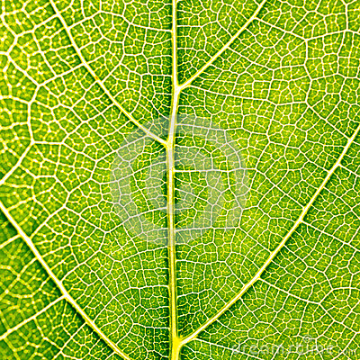 Free Grape Leaves Texture Leaf Background Macro Green Light Closeup Stock Image - 97166251
