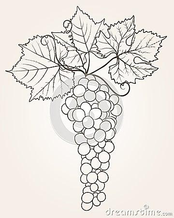 Grape outline
