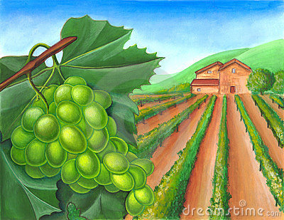 Grape and rural landscape