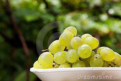 Grape and vine
