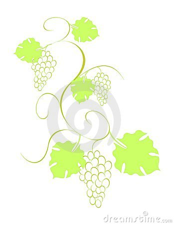Grape vine with bunches and leaves