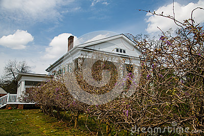 Grape Vines by Colonial Home