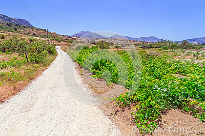 Grape vineyard in the landscape of Crete