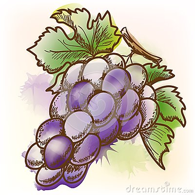 Grape, watercolor painting
