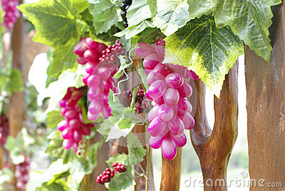 Grapevine with wine grape cluster close up