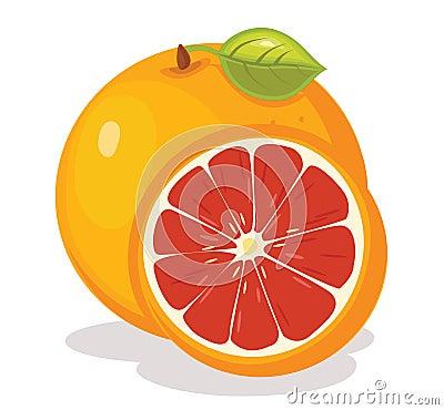 Grapefruit vector illustration