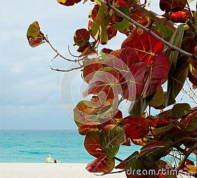 Free Grapeleaf Beach Royalty Free Stock Photography - 524707