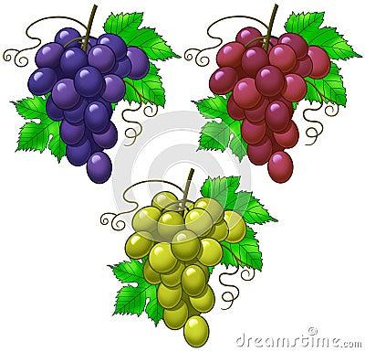 Free Grapes Royalty Free Stock Image - 10830356