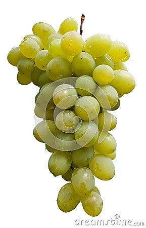 Free Grapes Stock Image - 11076731