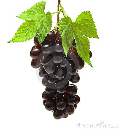 Free Grapes Stock Images - 16134824