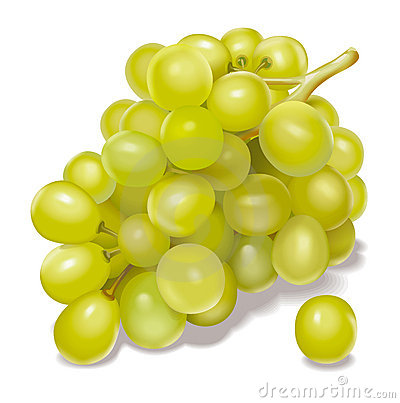 Grapes Vector Illustration