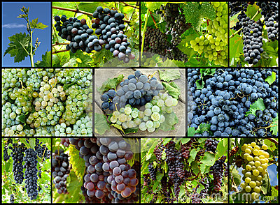 Grapes collage