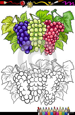Free Grapes Fruits Illustration For Coloring Book Stock Photography - 31573782