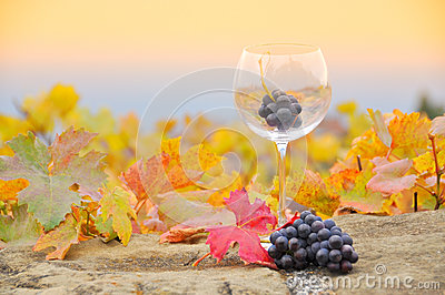 Grapes in the glass