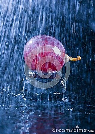 Free Grapes In The Rain Stock Photo - 2180780