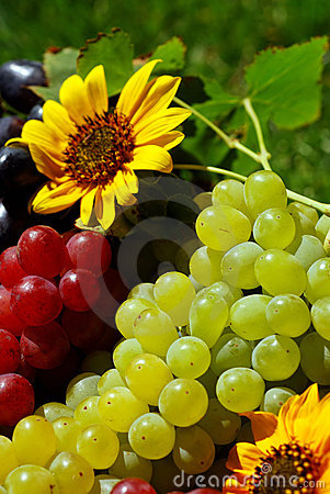 Free Grapes In Vintage Fruit Box Royalty Free Stock Image - 5377946