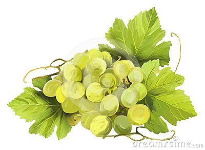 Grapes With Leaves Stock Photography - Image: 24575052