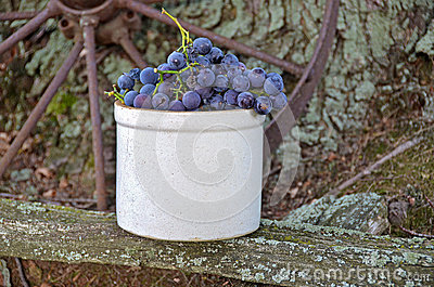 Grapes in old crock