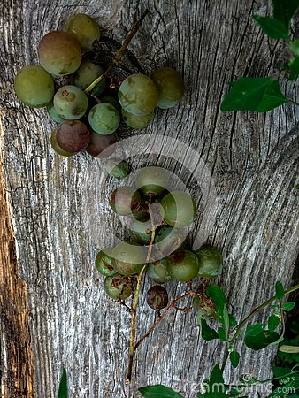 Free Grapes On A Bench Royalty Free Stock Photography - 139372787