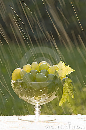 Grapes in the rain