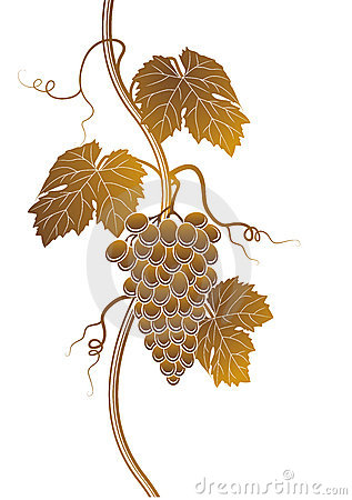 Grapes silhouette