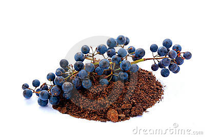 Grapes in soil