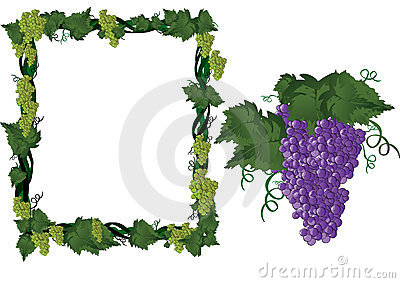Grapes on vine in frame