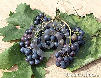 Grapes on vine leaves