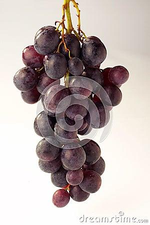 Free Grapes - Weintrauben Royalty Free Stock Photography - 472567