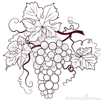 Free Grapes With Leaves Royalty Free Stock Images - 6844629