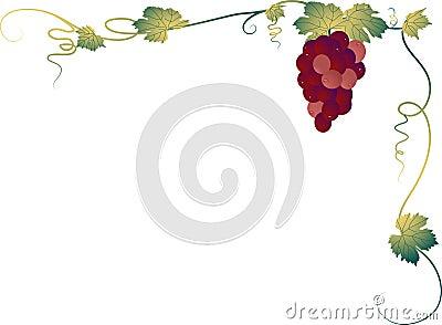 Grapevine corner