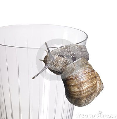 Grapevine snail on drinking glass