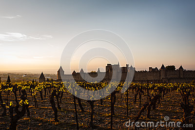 Grapevines glow in sunset walled city ramparts
