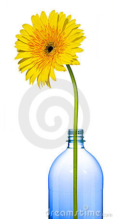 Graphic Yellow Flower Bottle Isolated