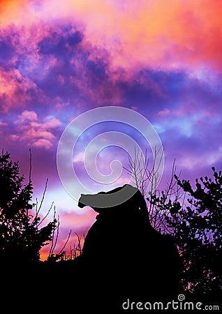 Égrappage et coucher du soleil de puma